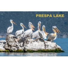 Pelikány - Jazero Prespa