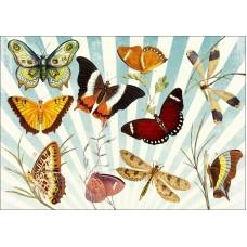 Magnetka Motýle